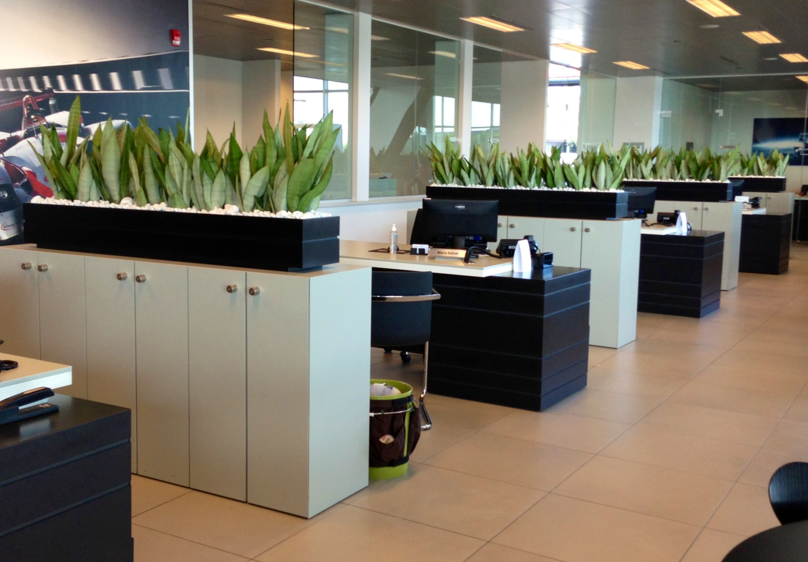 Top 8 Natural Green Plants Suits Your fice Indoors